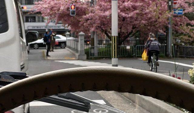 一条戻橋の桜、満開じゃん!!!アレルギーで苦しい季節、最高潮!てか最高潮って言葉、合ってるのかな。関係ないけど、衣笠教会の逆光がかっこいいのでついでにパチリ。 (from Instagram)