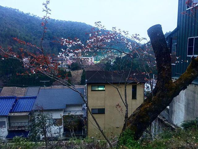 家の前の花たち (from Instagram)