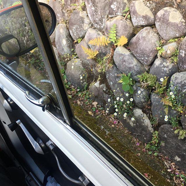 道端の花 (from Instagram)