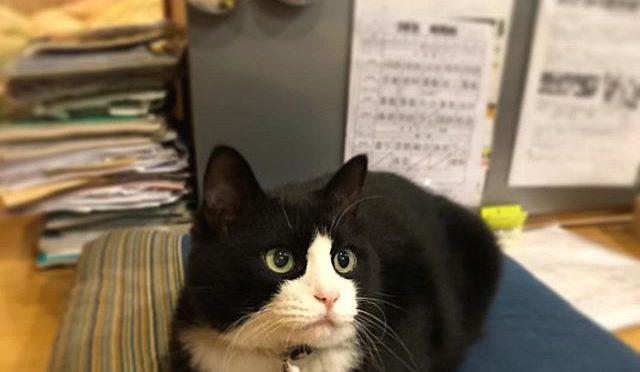 iPhoneのインスタ、なんか変!昨日からずっとこの猫が居座っている。いや、こいつだけじゃなく別の投稿も全然更新されていない。アプリ削除、再インストールしてみたけど症状変わらず。猫見飽きたわ(笑) (from Instagram)