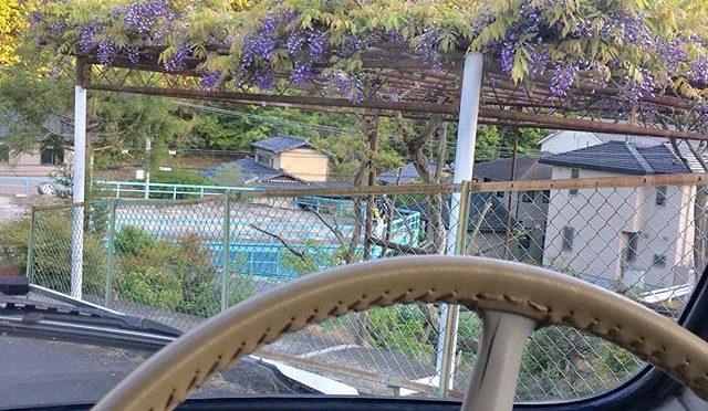 チンクのタイヤ交換したので試運転。近所の坂道下って来たら藤が咲き始めていた。 (from Instagram)